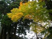 2018-11-05中尊寺菊祭り087