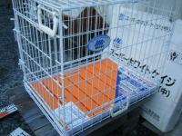 スーパーホワイトベージ(中)MR PET No.302 東京ペット株式会社16