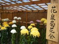 2018-11-05中尊寺菊祭り097