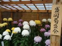 2018-11-05中尊寺菊祭り096