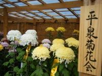2018-11-05中尊寺菊祭り099