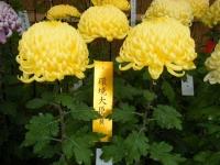 2018-11-05中尊寺菊祭り0108