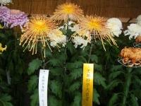 2018-11-05中尊寺菊祭り0113