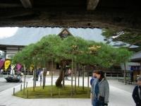 2018-11-05中尊寺菊祭り0118