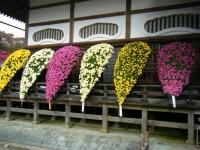 2018-11-05中尊寺菊祭り0127