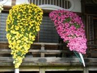 2018-11-05中尊寺菊祭り0128