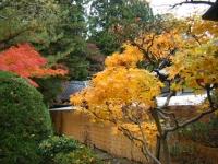 2018-11-05中尊寺菊祭り0140