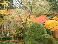 2018-11-05中尊寺菊祭り0139