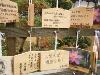 2018-11-05中尊寺菊祭り0137