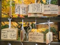 2018-11-05中尊寺菊祭り0136