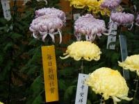 2018-11-05中尊寺菊祭り0146
