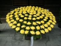 2018-11-05中尊寺菊祭り0151