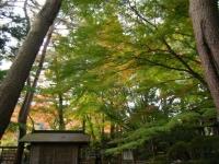 2018-11-05中尊寺菊祭り0156