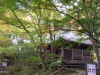 2018-11-05中尊寺菊祭り0154