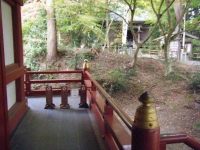 2018-11-05中尊寺菊祭り0164