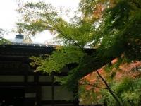 2018-11-05中尊寺菊祭り0161