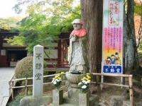 2018-11-05中尊寺菊祭り0159
