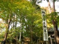2018-11-05中尊寺菊祭り0167