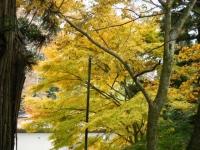 2018-11-05中尊寺菊祭り0165