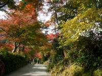 2018-11-05中尊寺菊祭り0176