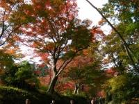 2018-11-05中尊寺菊祭り0175