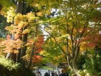 2018-11-05中尊寺菊祭り0188