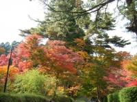 2018-11-05中尊寺菊祭り0185