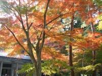 2018-11-05中尊寺菊祭り0190