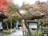 2018-11-05中尊寺菊祭り0200