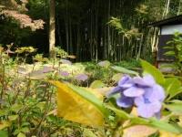 2018-11-05中尊寺菊祭り0205
