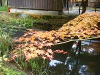 2018-11-05中尊寺菊祭り0204