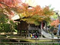 2018-11-05中尊寺菊祭り0212