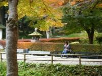 2018-11-05中尊寺菊祭り0211