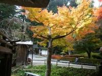 2018-11-05中尊寺菊祭り0210