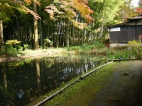2018-11-05中尊寺菊祭り0209