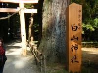 2018-11-05中尊寺菊祭り0226