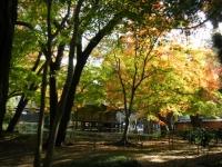 2018-11-05中尊寺菊祭り0260