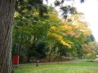 2018-11-05中尊寺菊祭り0258