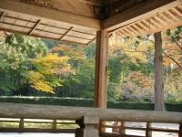 2018-11-05中尊寺菊祭り0255