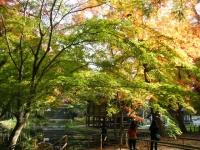 2018-11-05中尊寺菊祭り0262