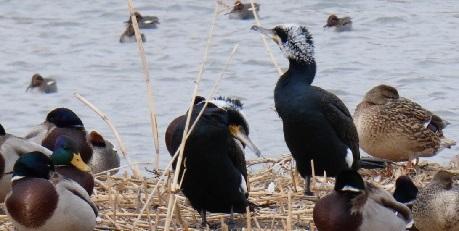 1 御宝田遊水池 鳥の名前は