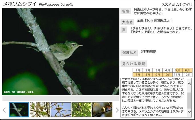 konashidaira201810-鳥類04-1