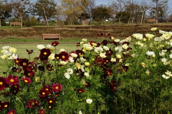 花菜ガーデン1