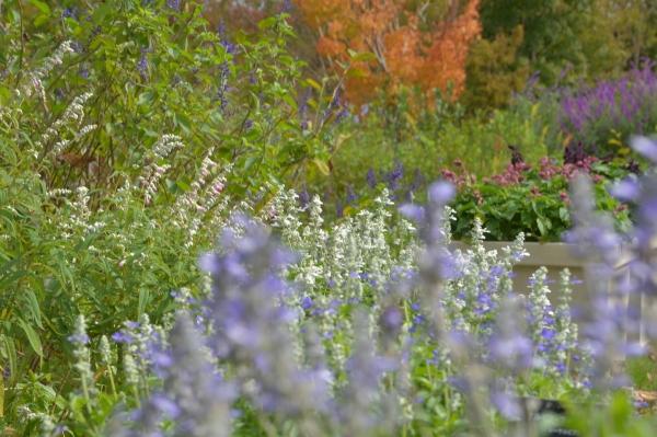 花菜ガーデン19