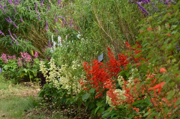 花菜ガーデン22