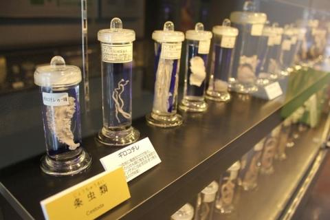 1024px-laika_ac_meguro_parasitological_museum_7482791412.jpg