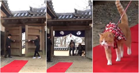 海外「日本でしかあり得ない!」 日本の城に誕生した猫の城主が海外ネットで話題に