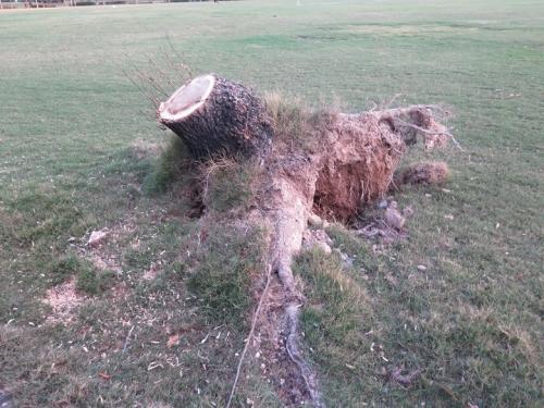海浜公園 台風で切られた木