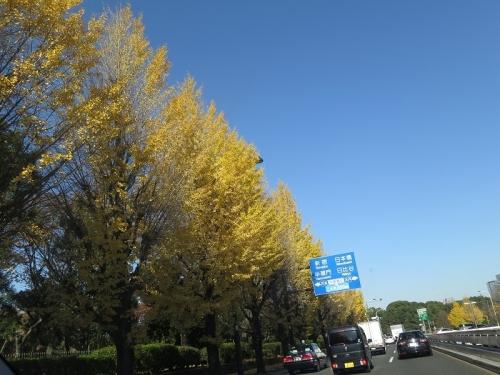 東京 銀杏並木