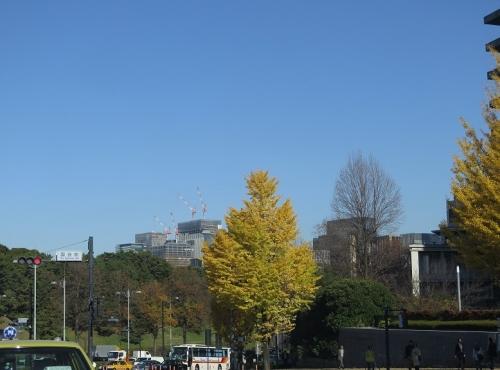 東京 国会前 銀杏並木